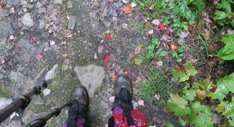 TaosDawn_LT_WetBootsNLeaves_800_px