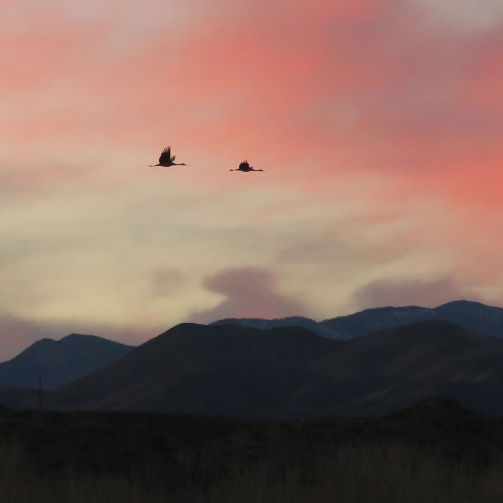 finding grounding in a pair of sandhill cranes flying north to their evening roost, bosque del apache, photo by dawn chandler