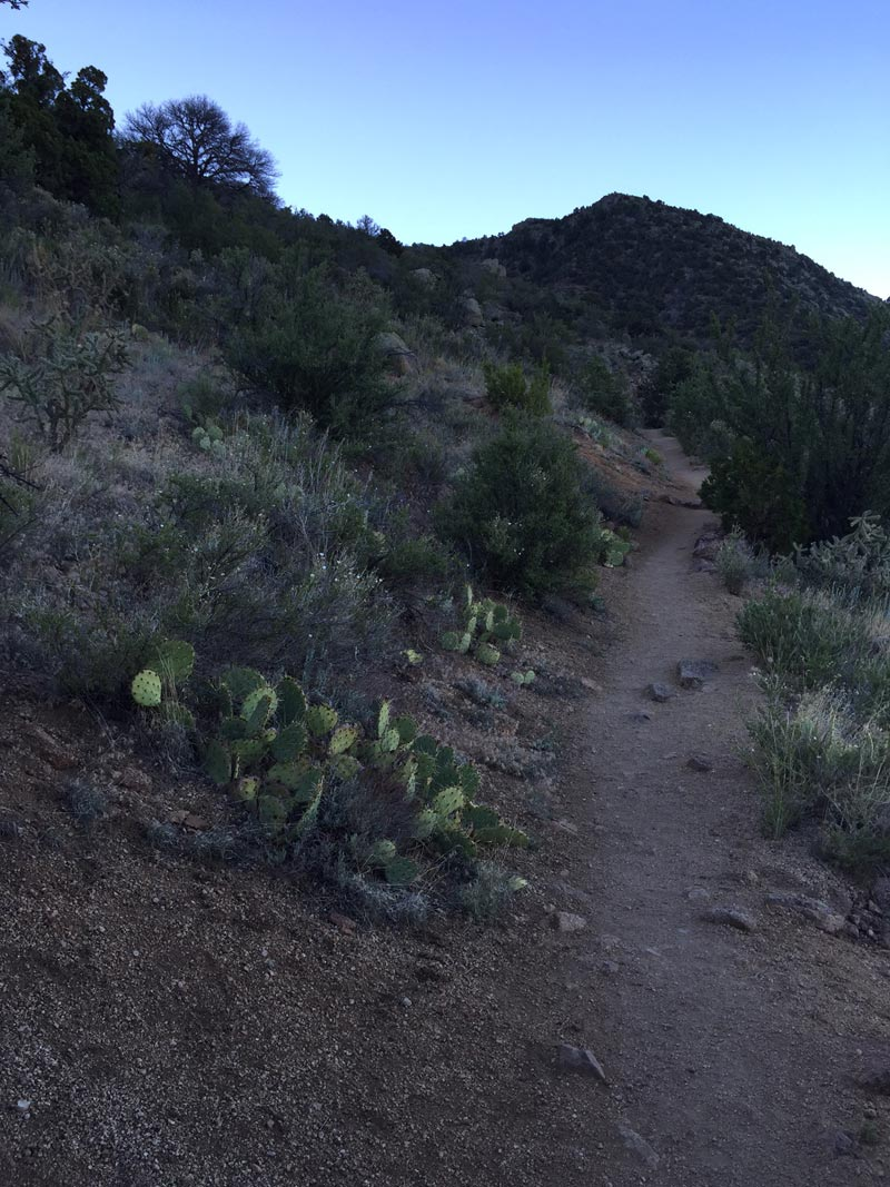 photo by artist dawn chandler of early morning on the la luz trail