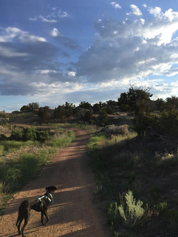 Wilson Pupster along Santa Fe's Rail Trail. Photo by Santa Fe Artist Dawn Chandler