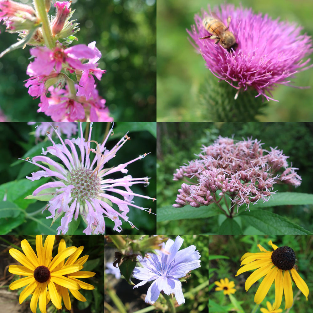 Along the Vermont Appalachian Trail - tiny beautiful things - flowers - photo by TaosDawn - Santa Fe artist and backpacker Dawn Chandler