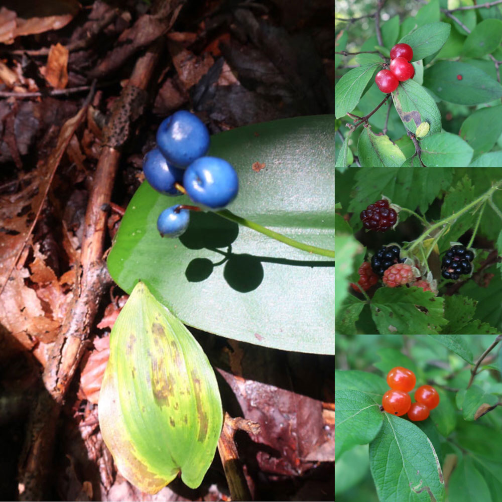 Along the Vermont Appalachian Trail - tiny beautiful things - berries - photo by TaosDawn - Santa Fe artist and backpacker Dawn Chandler