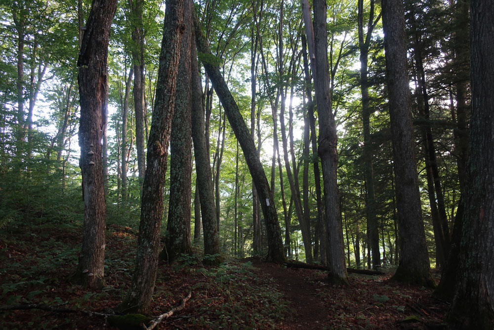 Along the Vermont Appalachian Trail - tiny beautiful things - forest path- photo by TaosDawn - Santa Fe artist and backpacker Dawn Chandler