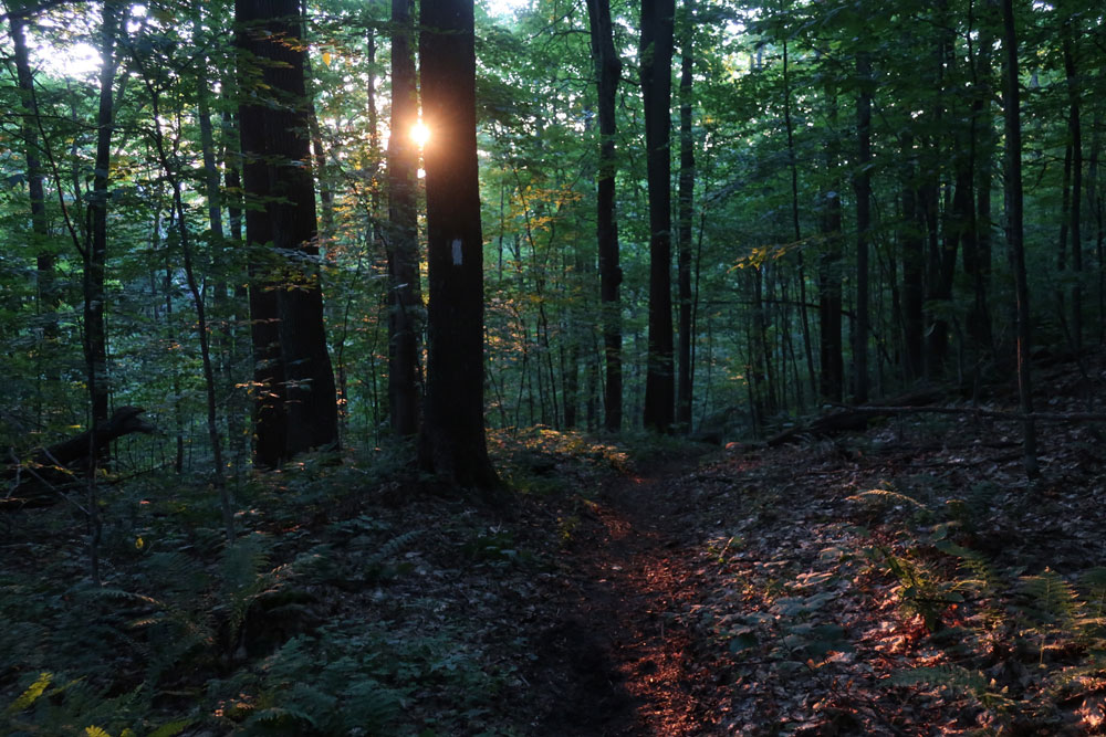 Along the Vermont Appalachian Trail - sunrise light below Thistle Hill Shelter - photo by TaosDawn - Santa Fe artist and backpacker Dawn Chandler