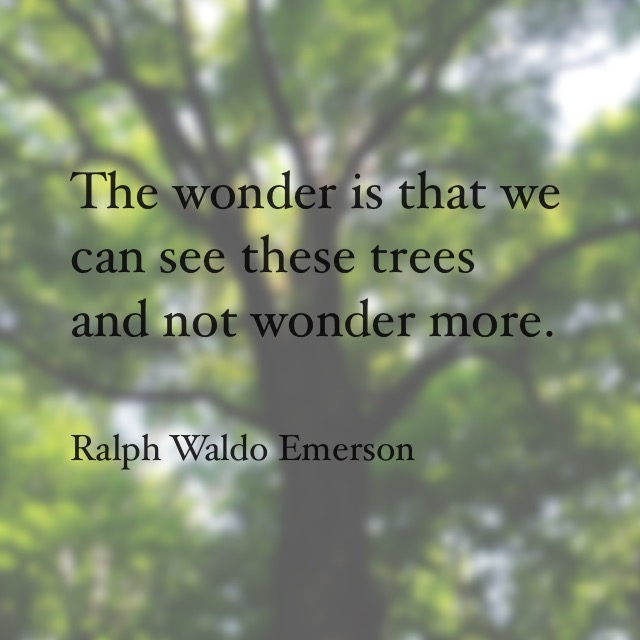 Along the Vermont Appalachian Trail - tree quote image created by TaosDawn - Santa Fe artist and backpacker Dawn Chandler