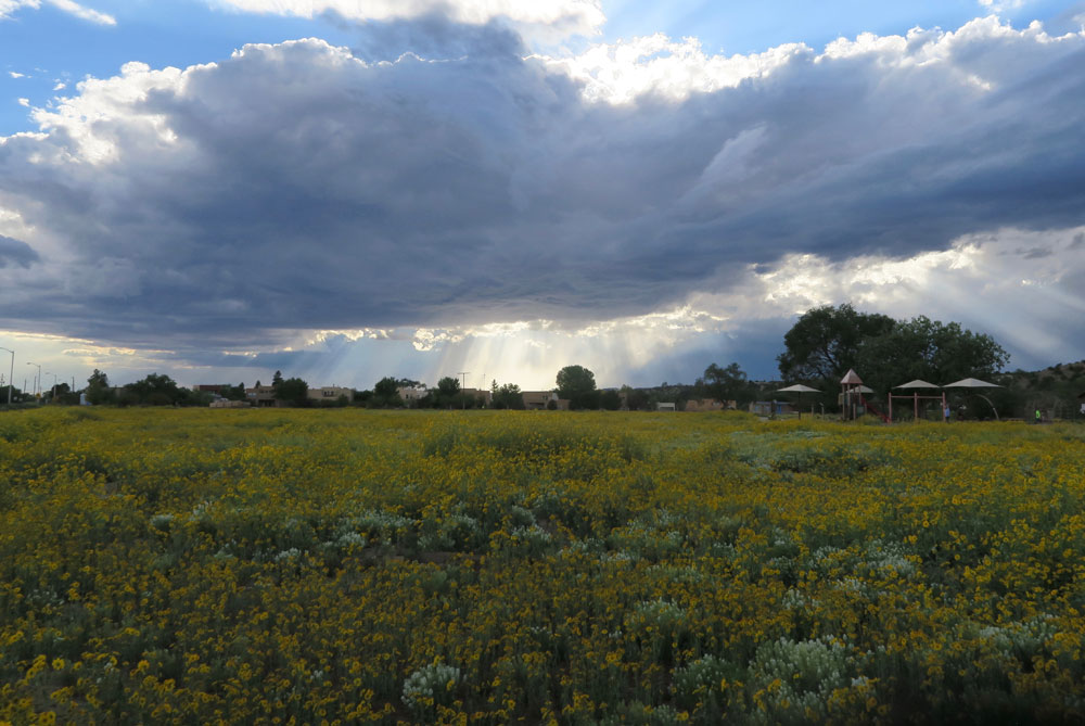 new mexico gold: september evening in frenchy's field, an explosion of golden crownbeard, in santa fe, new mexico photographed by new mexico artist dawn chandler