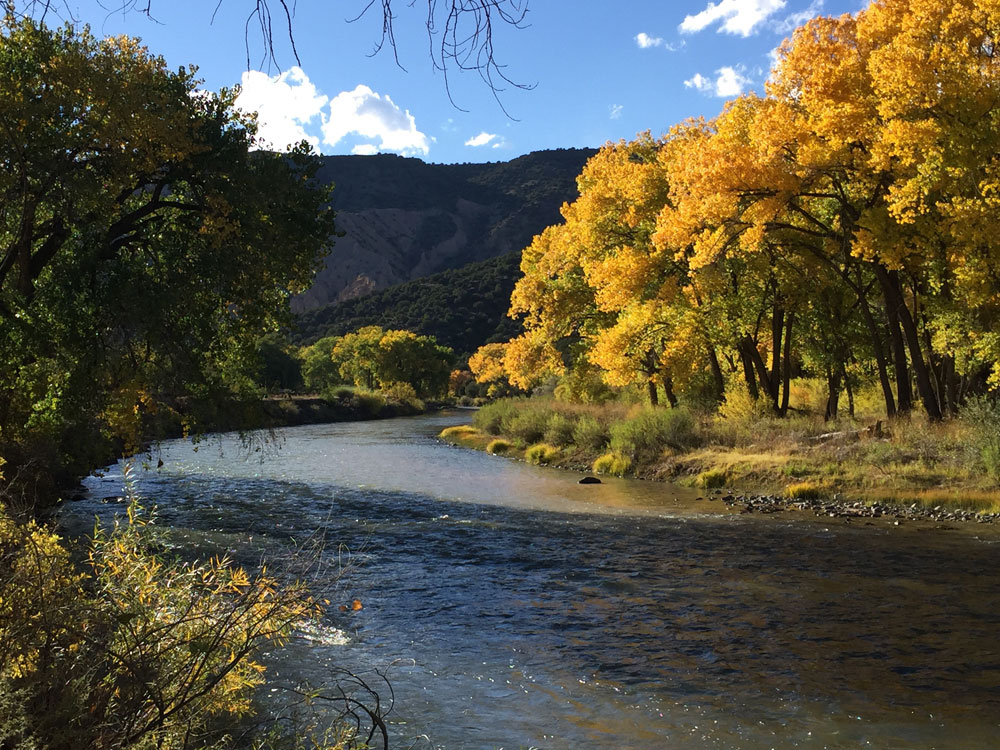 new mexico gold: golden autumn cottonwoods along the rio grande river below pilar in new mexico photographed by new mexico artist dawn chandler
