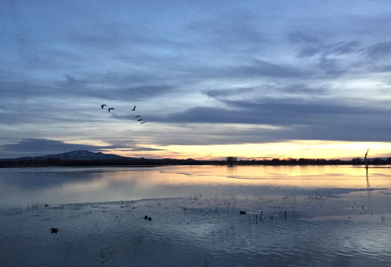 Cranes flying toward the setting sun at the Bosque del Apache 5 January 2019, photo by artist Dawn Chandler