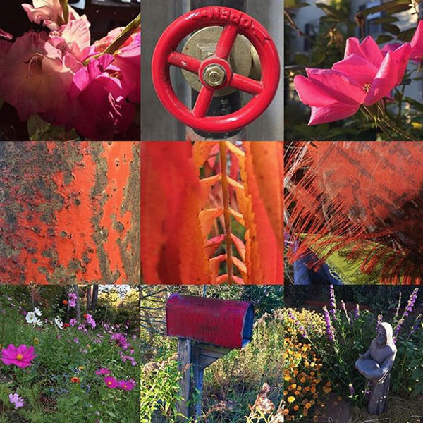 A montage of red 'tiny beautiful things' artist Dawn Chandler encounters in her rambles.