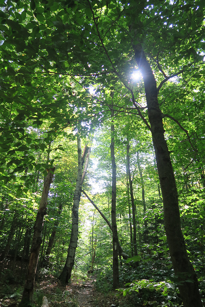 Sunlight through the trees of the Long Trail. Photo by Dawn Chandler.
