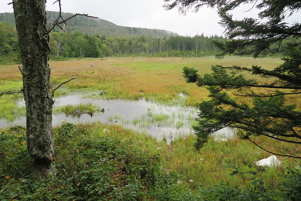 One of the many marshes along Vermont's Long Trail. Photo by Dawn Chandler.