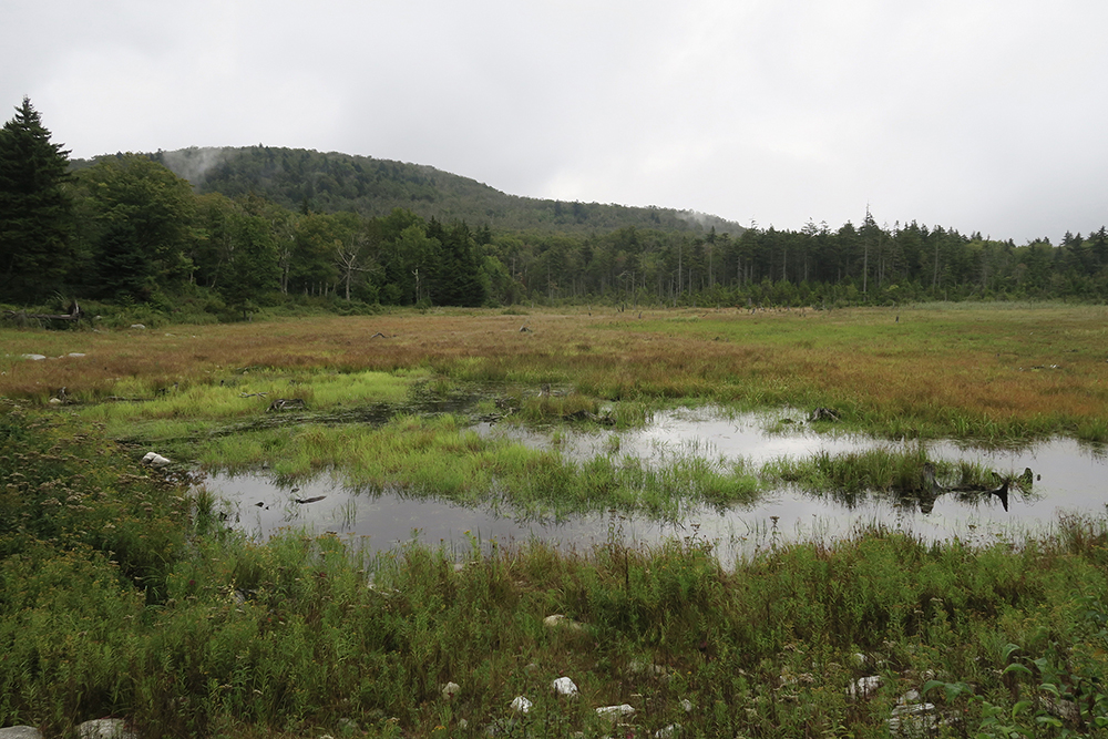 A marsh along Vermont's Long Trail. Photo by Dawn Chandler.