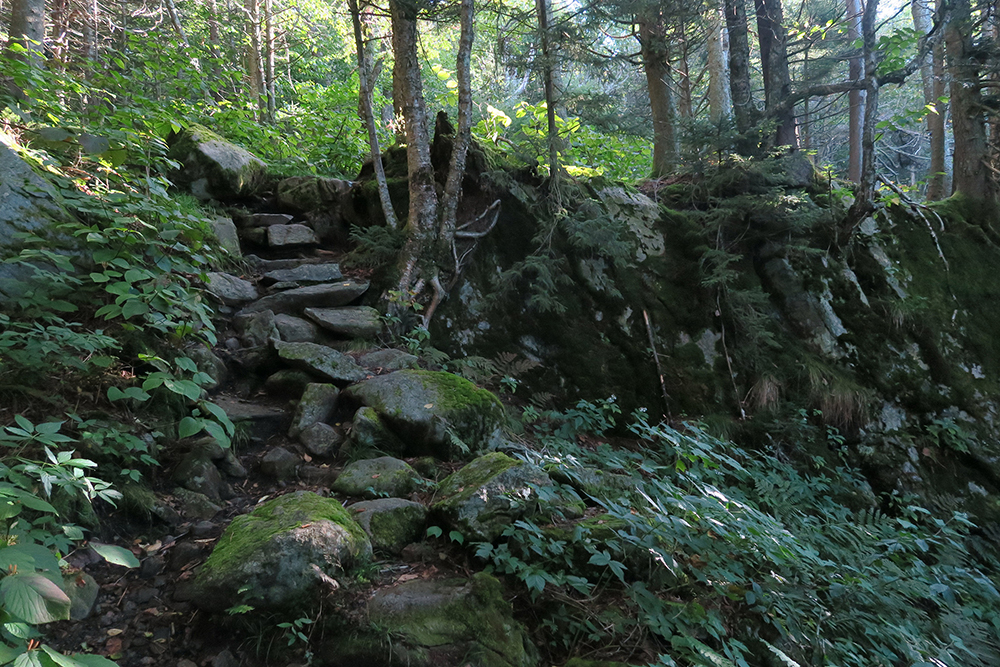 A mossy stair section of the Long Trail in southern Vermont. Photo by artist and thru-hiker Dawn TaosDawn Chandler.