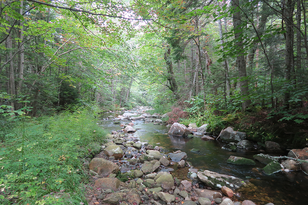 Gorgeous Vermont brook along the Long Trail. Photo by artist and thru-hiker Dawn TaosDawn Chandler.
