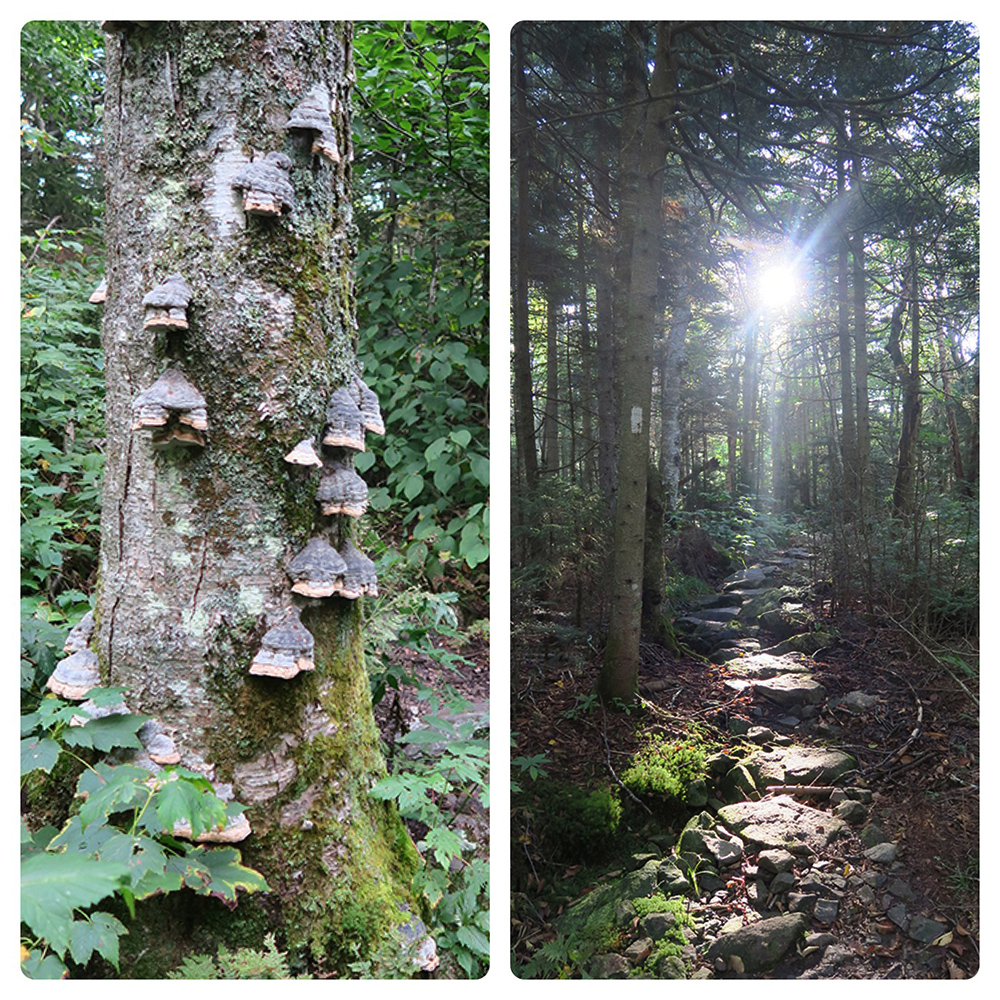 Forest light and lichens along the Long Trail. Photo by artist and thru-hiker Dawn TaosDawn Chandler.