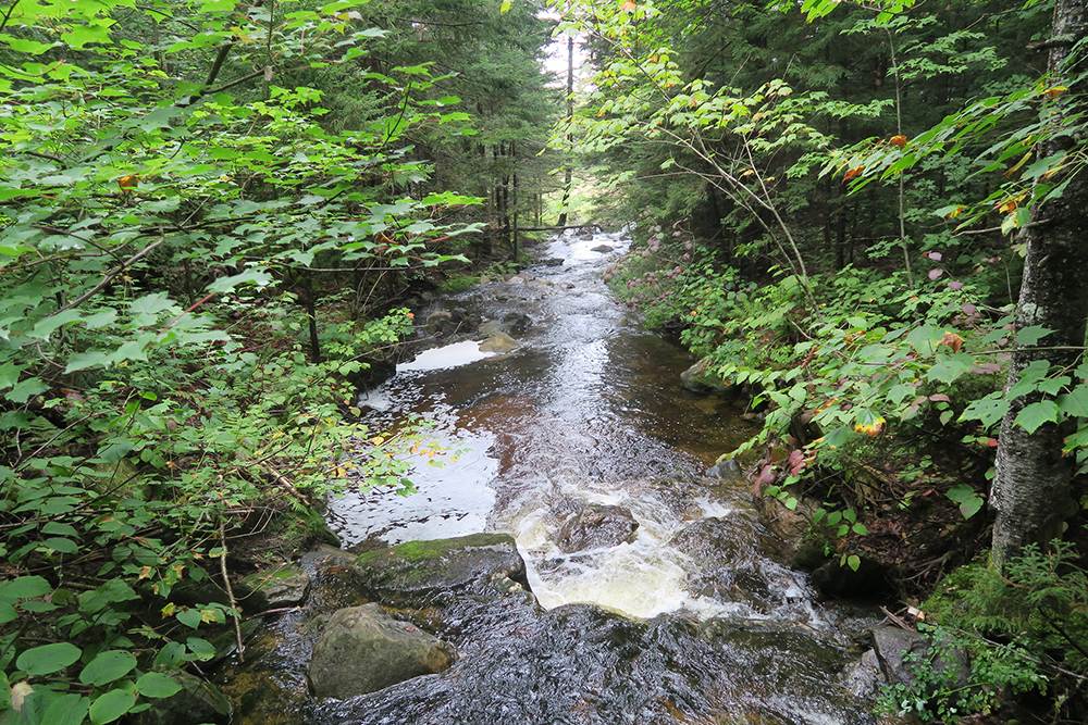 A beautiful Vermont stream somewhere between Stratton Mountain and Stratton Pond. Photo by artist and LT thru-hiker Dawn Chandler.